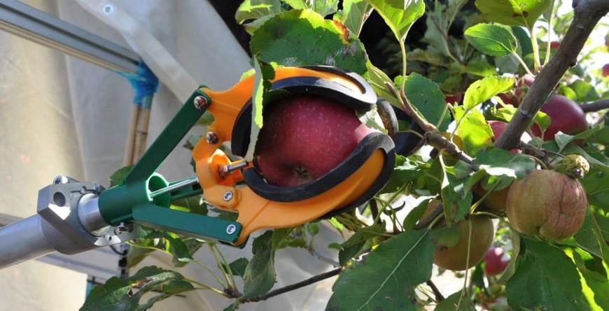 для сбора урожая плодовых культур